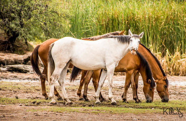 Horses Art Print featuring the photograph Smile by Sandy Klewicki