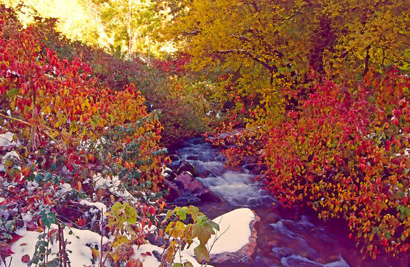Stream Art Print featuring the photograph Stream In Autumn by Steve Ohlsen