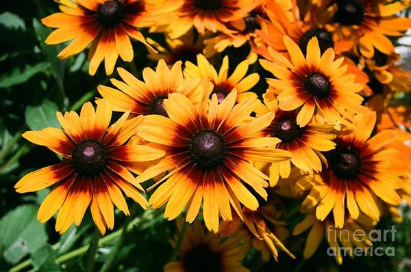 Sunflowers Art Print featuring the photograph Sunflowers by Dean Triolo