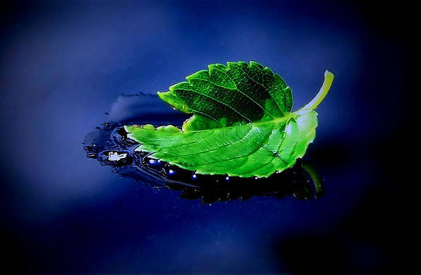 Leaf Art Print featuring the photograph The Leaf by Karen Scovill