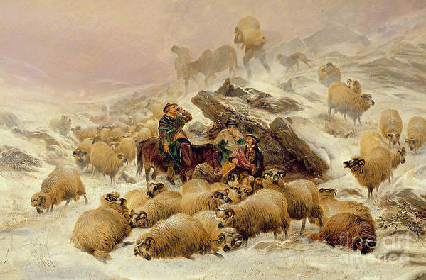 Sheep Print featuring the painting The Warmth Of A Wee Dram by TS Cooper