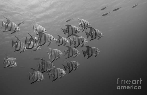 Photography Art Print featuring the photograph Tropical Black And White by Ryan Ware