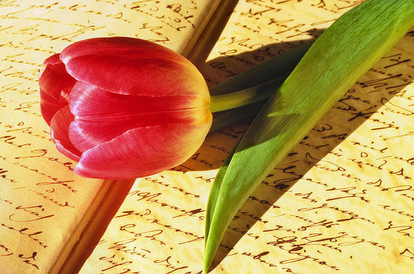 Bloom Art Print featuring the photograph Tulip On An Open Antique Book by Tony Ramos
