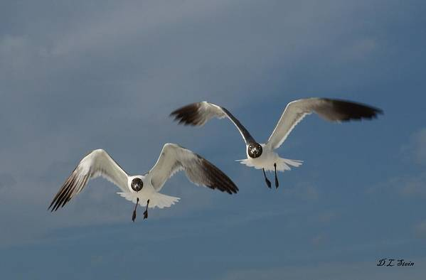Seagulls Art Print featuring the photograph Two Seagulls by Dennis Stein