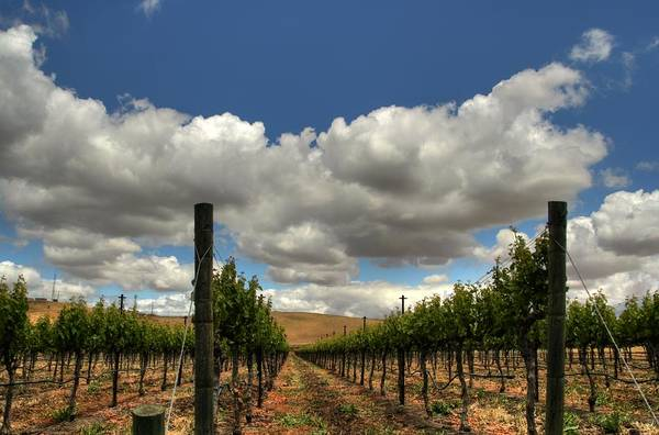 Livermore Valley Winery Art Print featuring the photograph Vineyard by Douglas Shier