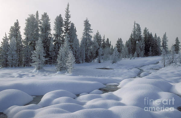 Yellowstone Art Print featuring the photograph West Thumb Snow Pillows by Sandra Bronstein