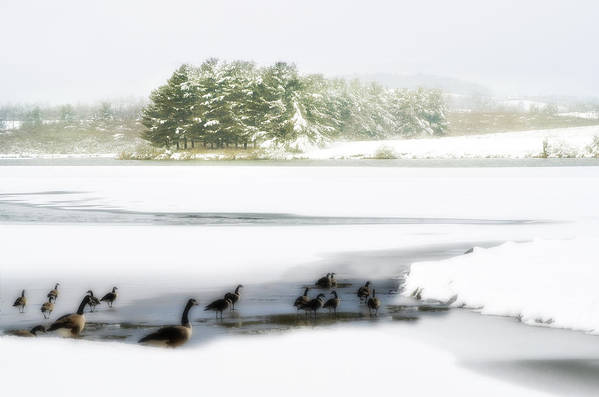 Lake Print featuring the photograph Willow Lake Geese by Kathy Jennings