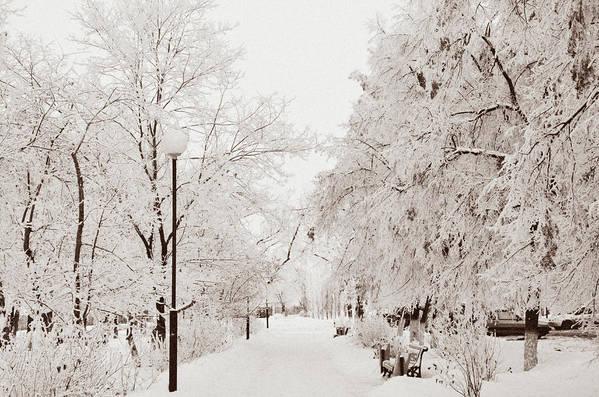 Snow Art Print featuring the photograph Winter by Gulnara Darbaeva