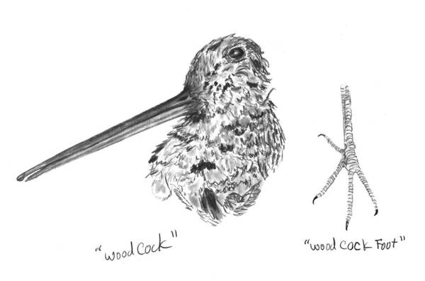 Iowa Art Print featuring the drawing Woodcock With Foot by Kevin Callahan