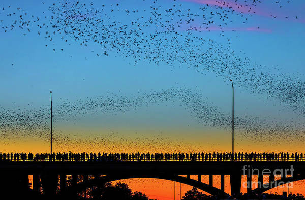 Large Group Of People Art Print featuring the photograph Hundreds Of People Gather To See The World's Largest Urban Bat C by Austin Bat Tours