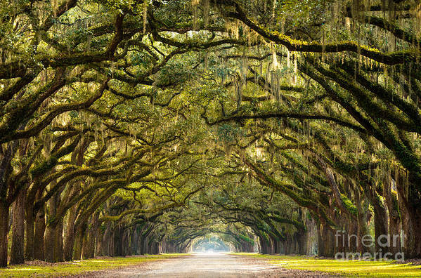 Forsyth Art Print featuring the photograph A Stunning, Long Path Lined With by Serge Skiba