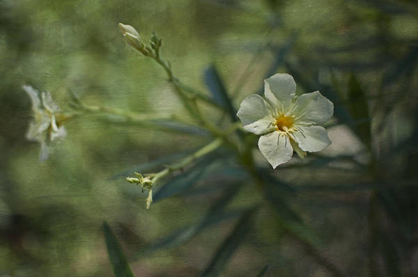 Flowers Art Print featuring the photograph ... by Mario Celzner