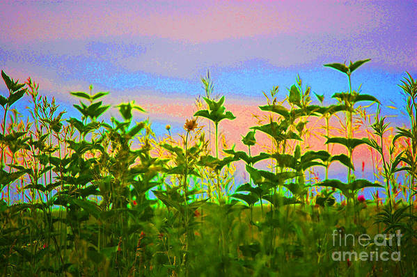 First Star Art Print featuring the photograph Meadow Magic by First Star Art