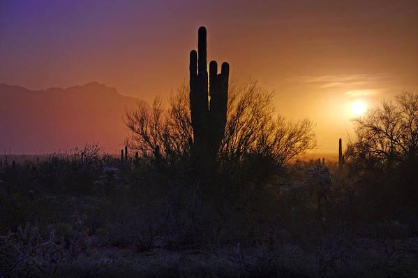Sunrise Art Print featuring the photograph A Sonoran Morning by Saija Lehtonen