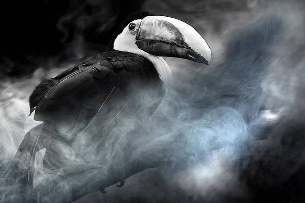 Bird Art Print featuring the photograph Bird by Christine Sponchia