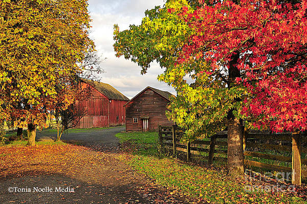 Photos Art Print featuring the photograph Fall On A Farm In Oregon by Tonia Noelle