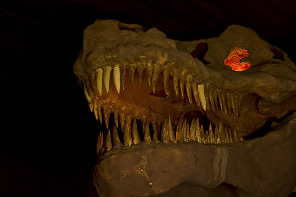 Grand Canyon Caverns Art Print featuring the photograph Fire In His Eyes by Kenan Sipilovic