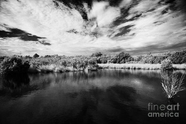 Florida Print featuring the photograph Flooded Grasslands And Mangrove Forest In The Florida Everglades Usa by Joe Fox