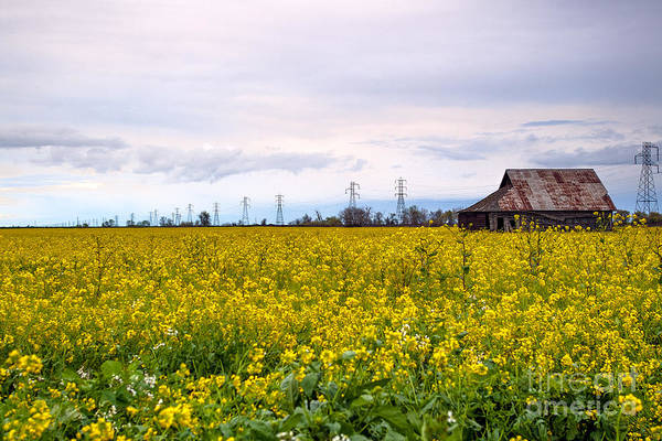 Farm Art Print featuring the photograph Landscape 22 P Sac Ca by Otri Park