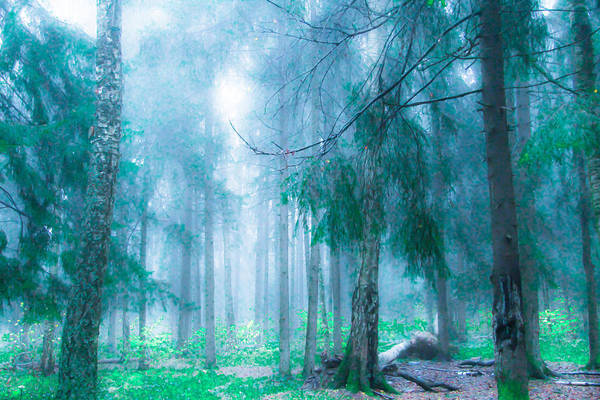 Forest Art Print featuring the photograph Magic Forest 5 by Armine Nersisyan