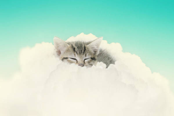 Kitten Art Print featuring the photograph On Cloud Nine by Amy Tyler