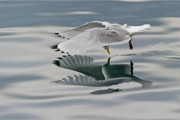 Seagull Art Print featuring the photograph Seagull by Eric Larue
