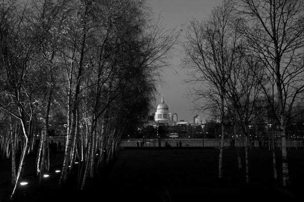 St Paul's Art Print featuring the photograph St Paul's With Silver Birches by Gary Eason