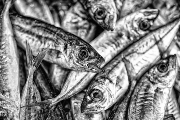 Fish Market Art Print featuring the photograph Tile Of Fishes by Dobromir Dobrinov
