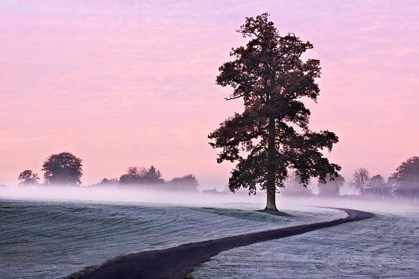 Tree Art Print featuring the photograph Tree At Dawn / Maynooth by Barry O Carroll