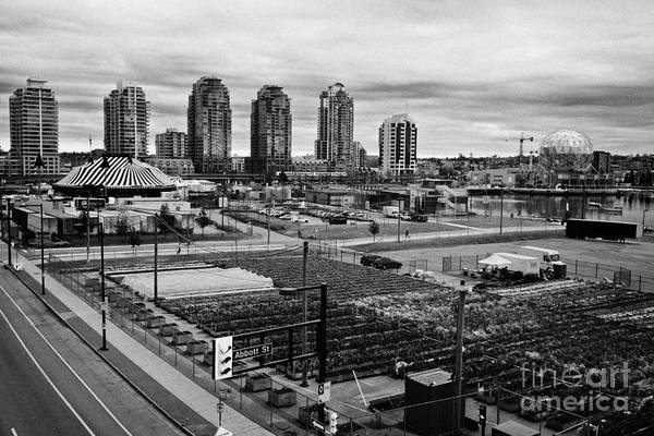 Concord Art Print featuring the photograph urban farm on unused lot at concord pacific place at false creek Vancouver BC Canada by Joe Fox