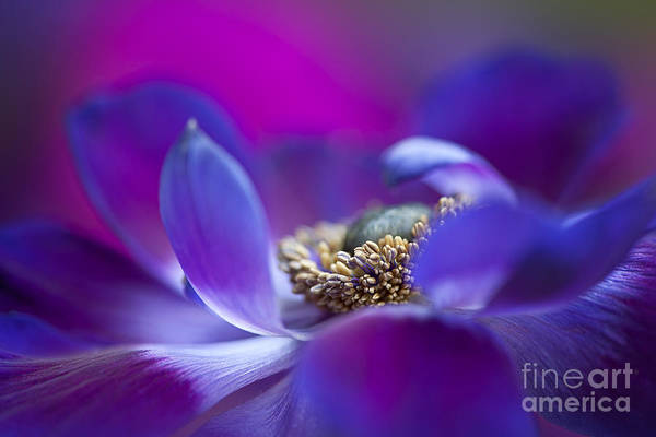Anemone Art Print featuring the photograph Windflower Waves by Jacky Parker