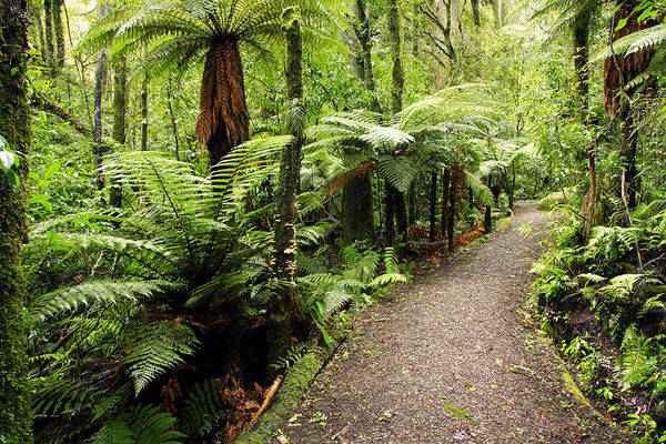 Forest Art Print featuring the photograph Forest Trail by Les Cunliffe