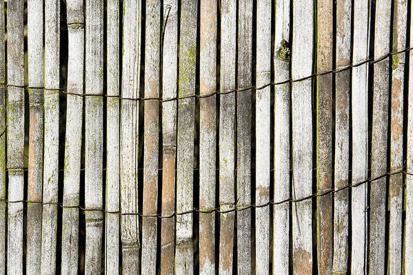 Abstract Art Print featuring the photograph Wood Background by Tom Gowanlock