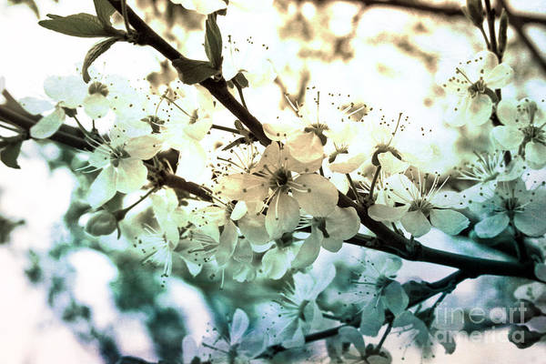 Spring Art Print featuring the photograph Spring by Lali Kacharava