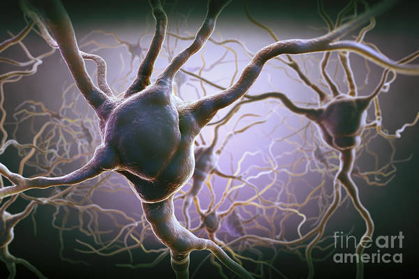 Anatomical Model Art Print featuring the photograph Neuron by Science Picture Co