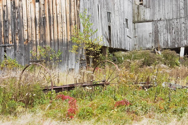 Building; Old; Old Building; Abandoned; Run-down; Architecture; Shed; Shack; Grunge; Structure; Window; Fall; Autumn; Weathered; Overgrown; Weeds; Country; Building Exterior; Rural; Rustic; Grass; Overcast; Wood; Siding; Maine; New England; Old Barn In Maine; Maine Barns; Old Barn; Weather Wood; Wooden Siding; Fall Foliage; Abandoned Building; Rustic; Rusctic Building; Maine Countryside; Country Living; Weathered Building; New England Barn Art Print featuring the photograph Old Barn In Fall Maine by Keith Webber Jr
