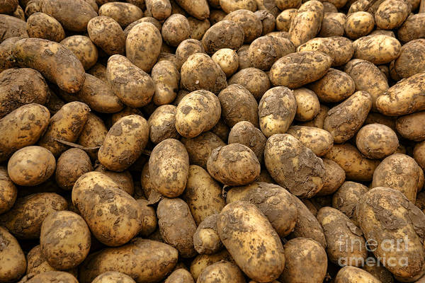 Potatoes Art Print featuring the photograph Potatoes by Olivier Le Queinec