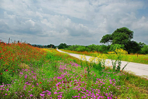 Landscape Art Print featuring the photograph Wildflower Wonderland by Lynn Bauer