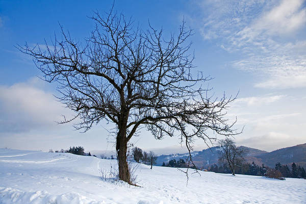 Trees Art Print featuring the photograph Winter Landscapes by Ian Middleton