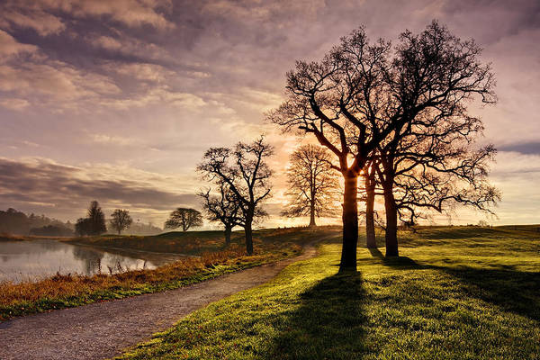 Trees Art Print featuring the photograph Winter Morning Shadows / Maynooth by Barry O Carroll
