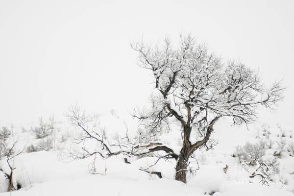 Winter Sage Art Print featuring the photograph Winter Sage by Sandi Mikuse