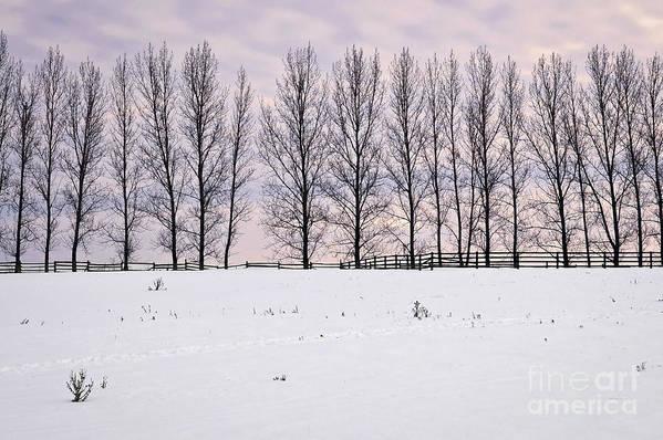 Landscape Print featuring the photograph Rural Winter Landscape by Elena Elisseeva