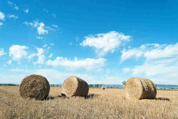 Agriculture Art Print featuring the pyrography Straw Bales At A Stubbel Field by Svetoslav Radkov