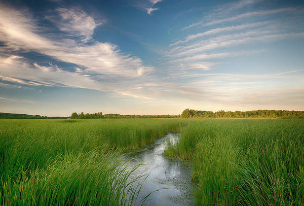 Cattail Art Print featuring the photograph Usa, New York State by Chris Murray
