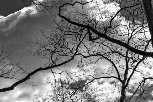 Branches Art Print featuring the photograph Branches And Clouds by Robert Ullmann