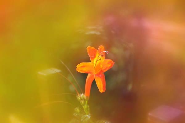 Flowers Art Print featuring the photograph Garden Flower  by Robert Butler