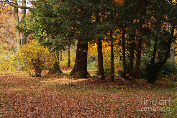 Foliage Art Print featuring the photograph Autumn by Angela Doelling AD DESIGN Photo and PhotoArt