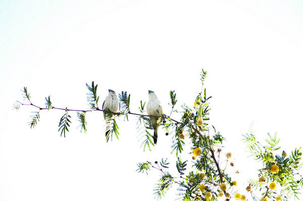 Birds Art Print featuring the photograph Birds by Anusha Hewage