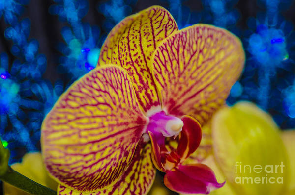 Art Print featuring the photograph Orchid by Gerald Kloss