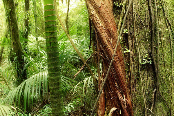 Forest Art Print featuring the photograph Jungle by Les Cunliffe